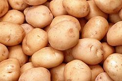 хранение картофеля и корнеплодов