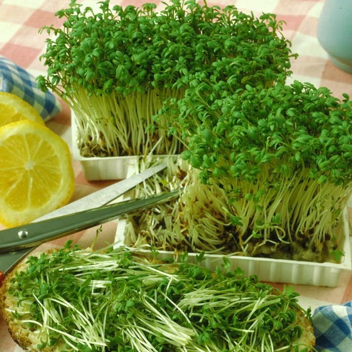 Салат в домашних условиях из семян 827