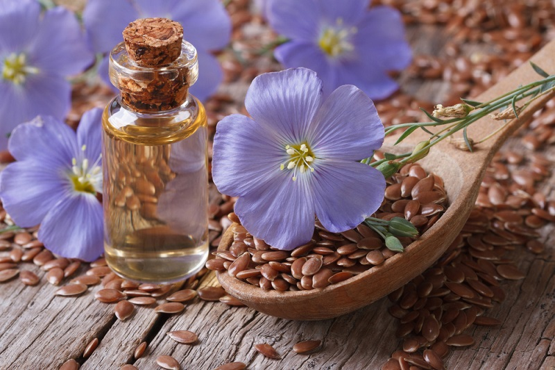 Семена льна и цветок
