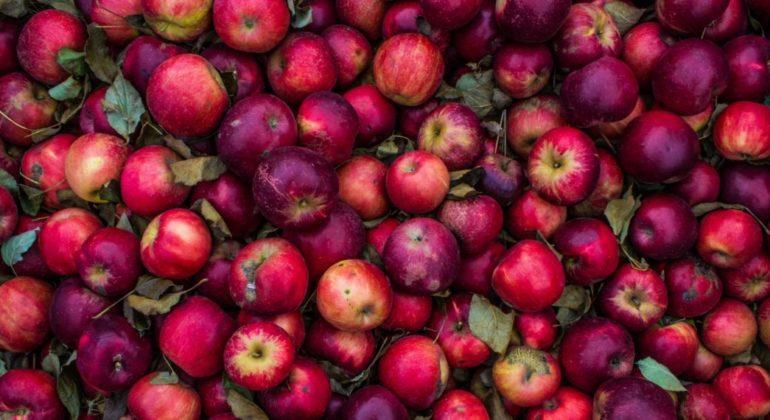 Яблоки: польза ивред яблок для здоровья организма человека