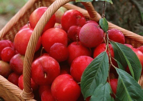 Выбор яблок для компота