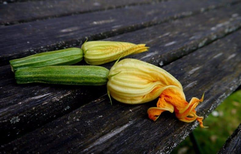 Соцветие кабачка